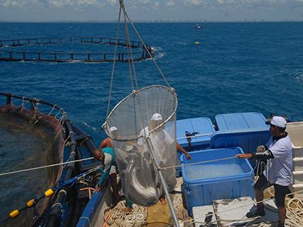 Piscicultura Marinha